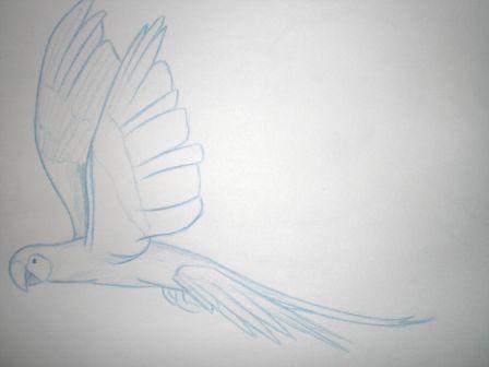 dessin_perroquet_vol.JPG